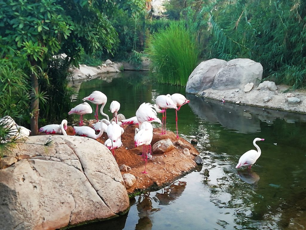 al ain zoo pictures